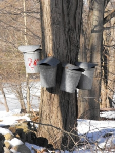 tapping-trees-0022